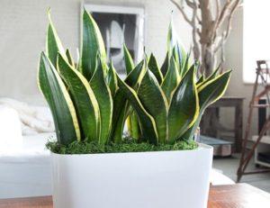 عشرة نباتات منزلية سهلة الرعاية