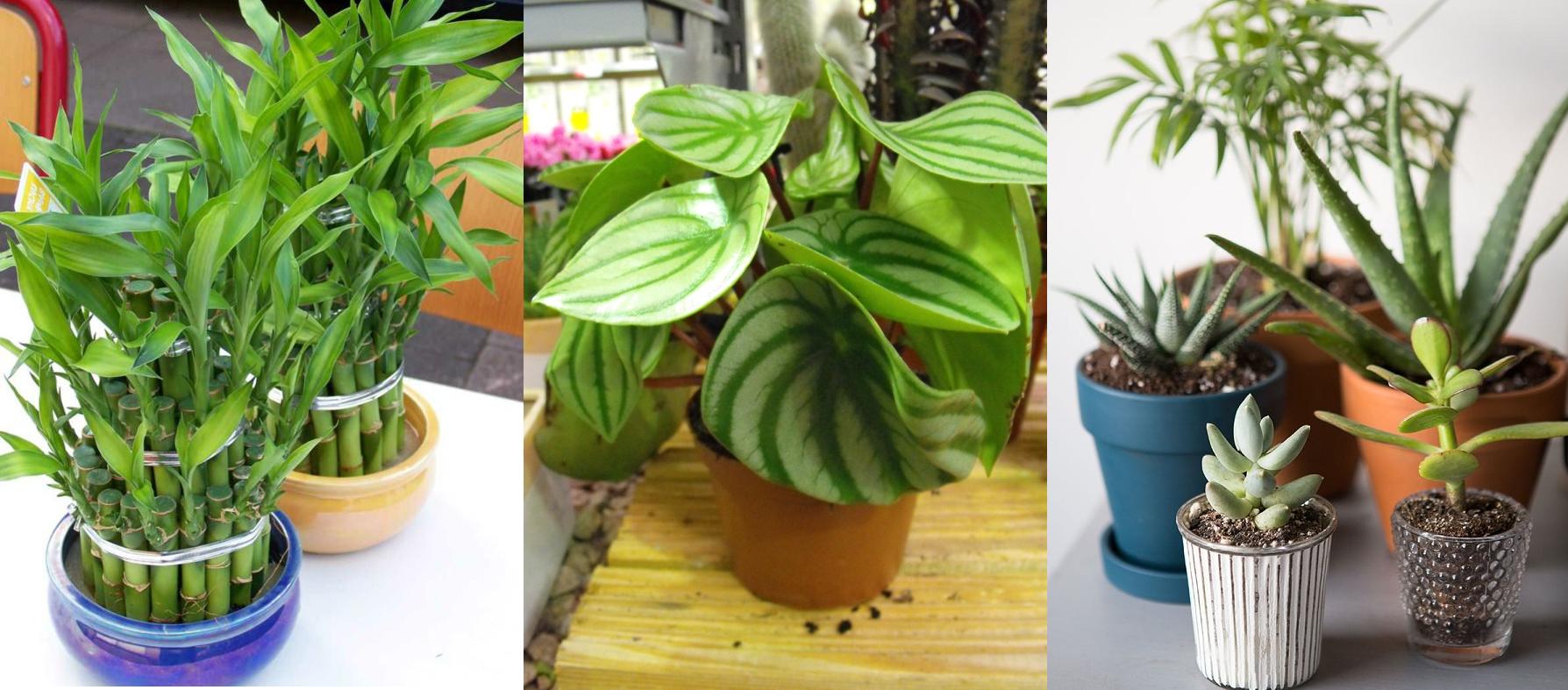 بالصور أفضل 10 نباتات داخلية للمبتدئات