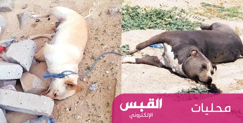 «الزراعة» تقتل الكلاب.. وتسممها بـ«فتوى شرعية»!