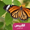 خبراء الطقس يكشفون سبب انتشار الفراشات